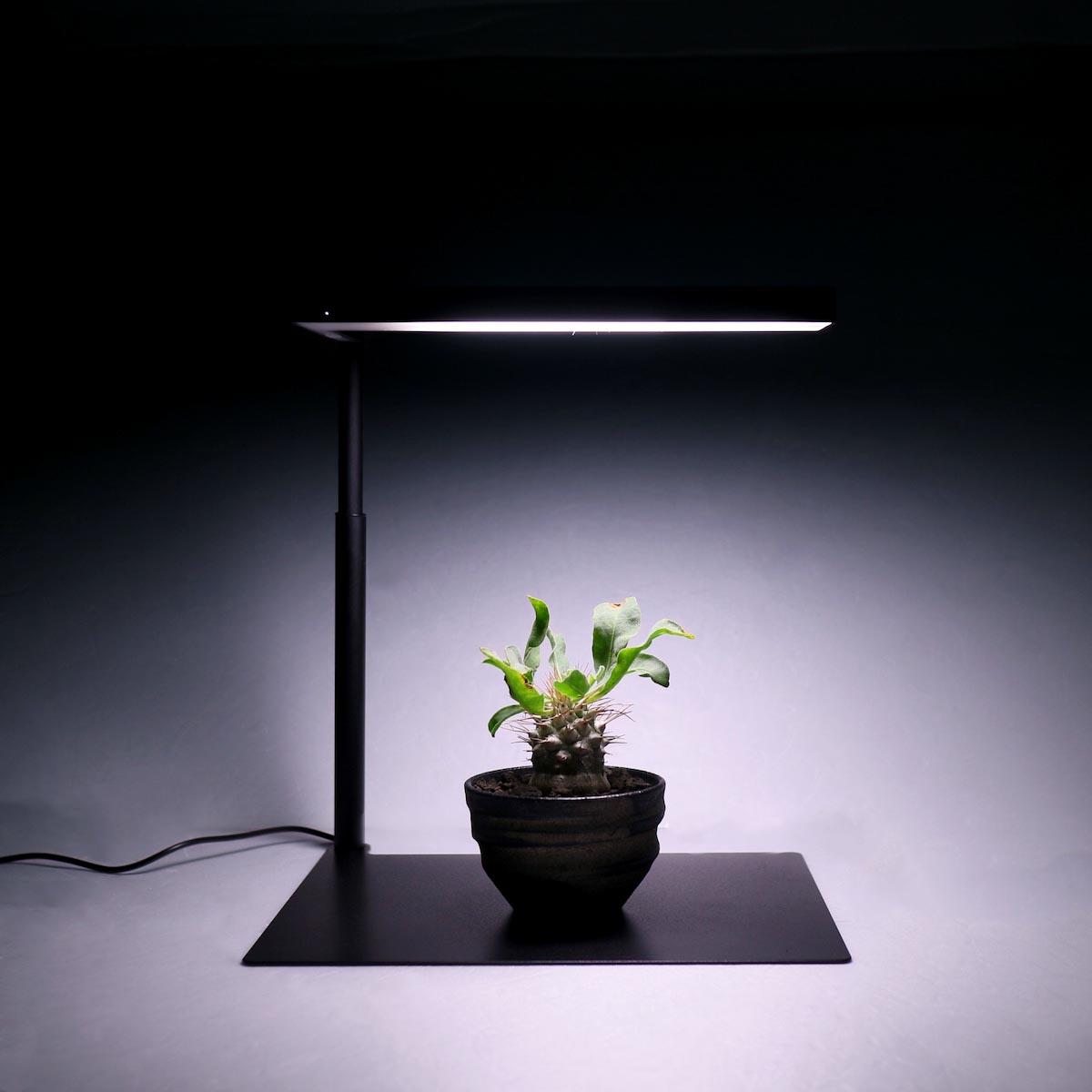 BOTANIZE / EXOTIC PLANT CULTIVATION LIGHT TOP