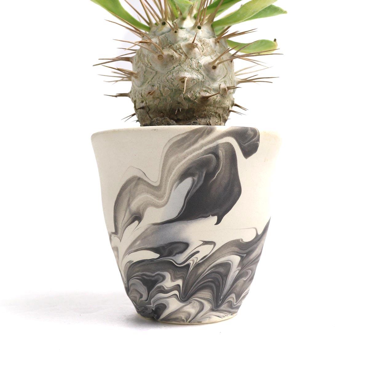 """Pachypodium Namaquanum (光堂) × Konect """"oboro""""【Botanize】鉢"""